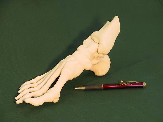 Wydrukowany w 3D Model kości stopy