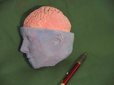 Wydruk czaszki