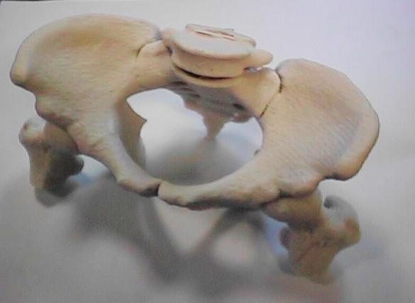 Wydruk kości miednicy