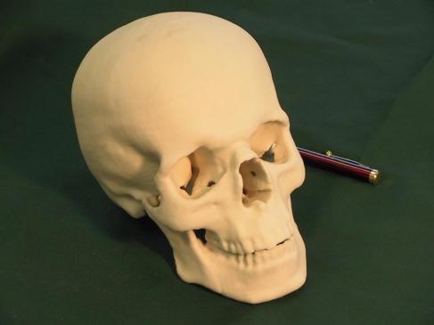 Wydruk 3D czaszki