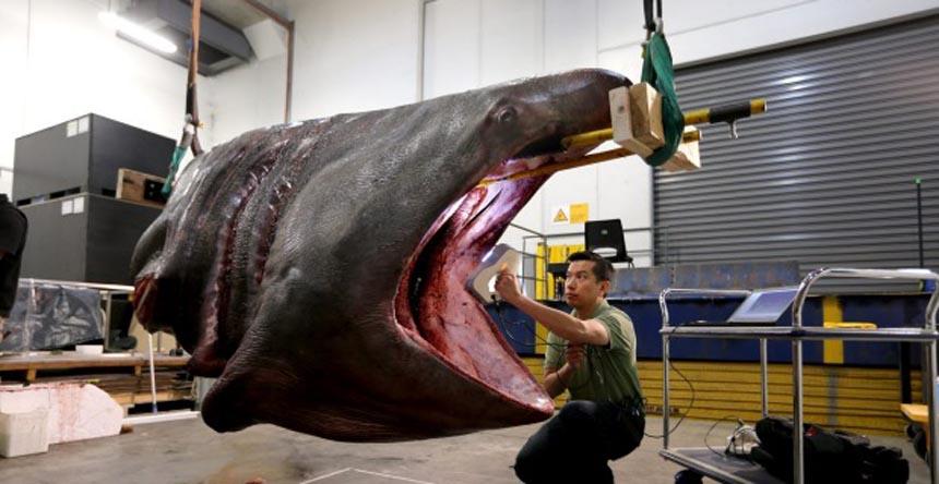 skanowanie-rekina-zarlzacza-wielkiego-1